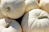 White boer pumpkins at the farmer's market
