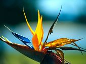 Beautiful Bird Of Paradise Flower