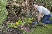 Young Man Gardening 1