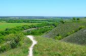 Summer landscape of nature reserve
