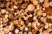 Holz ist hoch bei einem Sägewerk gestapelt.