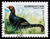 Postage Stamp Azerbaijan 1995 Caucasian Grouse, Bird