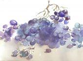 ripe grape