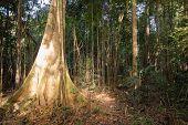 Sunlight Penetrating The Dense Vegetation In The Amazon Jungle