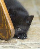 Cat lurks around the corner