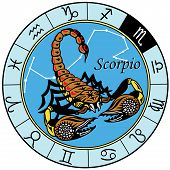 picture of scorpio  - scorpion or scorpio astrological zodiac sign isolated on white - JPG
