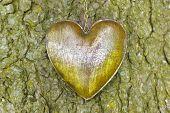 heart at tree