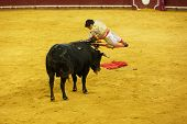 LISBON - JUNE 19: Diogo Peseiro bullfighter performs at a portuguese style bullfighting show in camp