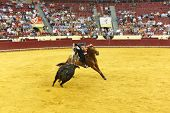 LISBON - JUNE 19: Luis Rouxinol Jr horsemen bullfighter performs at a portuguese style bullfighting