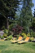 stock photo of lawn chair  - A pair of bright yellow designer lawn chairs invite you to relax in this beautifully landscaped backyard with tall trees in the background - JPG