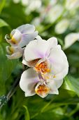 Detail of beautiful white orchid plant