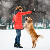 girl traing a furry dog breed golden retriever in winter poster