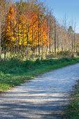 Fall Colors Along A Gravel Path