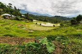 picture of mud-hut  - Traditional village with boat shaped roofs in the remote Mamasa Valley West Tana Toraja South Sulawesi Indonesia - JPG