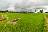 stock photo of mud-hut  - Stunning landscape and bright rice fields in the remote Mamasa region West Tana Toraja South Sulawesi Indonesia - JPG