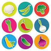 Set of vegetable icons in the circles: asparagus, broccoli, champignon, hot chili pepper, cucumber, onion, peas, tomato, zucchini. Vector illustration.