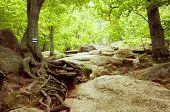 Vintage Autumn Forest Mountain Path
