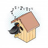picture of nesting box  - Starling and Nesting Box - JPG
