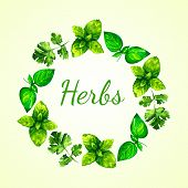 stock photo of oregano  - Realistic watercolor illustration herbs wreath. Basil. Parsley. 