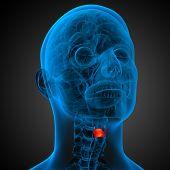 picture of larynx  - 3d render medical illustration of the larynx  - JPG