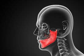 picture of mandible  - 3d rendered illustration  - JPG