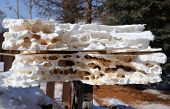 Polystyrene Insulation Damage by Carpenter Ants