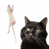 Cat And Rat poster