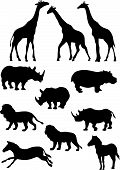 The African animals .