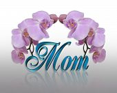 Orchids for MOM on Mothers day