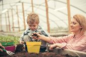 Little Boy With Mother. Mother And Little Boy Working In Modern Greenhouse Garden. Mother And Little poster