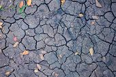Drought Land Top View Photo. Dry Soil With Crack Net And Fallen Yellow Leaves. Arid Land Texture. Bl poster