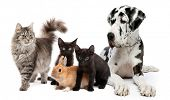 Group of cats and dogs and rabbit