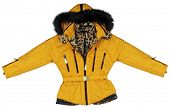picture of jupe  - yellow jacket - JPG