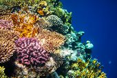 Living Coral reef in Red Sea, Egypt. Natural unusual background. poster