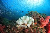 Coral bleaching from climate change  poster