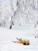 Cão de alegria brincando na neve.