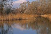 Idyllic Pond Scene
