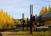 Trans-alaska Pipeline In Fall