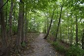 Hiking Path In Beautiful Woods View Inspirational Summer Landscape In Forest. Walking Footpath Or Bi poster