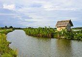 Little Palm Nupa deixa cabana