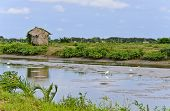 image of mud-hut  - Little Nupa Palm Leaves Hut In  Aquaculture - JPG