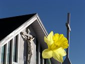 stock photo of life after death  - daffodil symbolises jesus rising from death on cross  - JPG