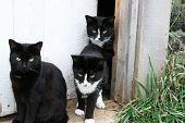 Family of cats in the doorway