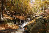 Stream Winding Threw Forest