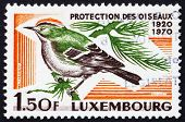 Postage stamp Luxembourg 1970 Goldcrest, bird