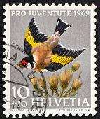 Postage stamp Switzerland 1969 European Goldfinch, Carduelis Car