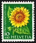 Postage stamp Switzerland 1961 Sunflower, Helianthus Annuus, Flowering Plant