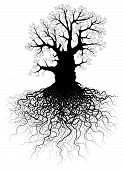 picture of contortion  - Editable vector illustration of a leafless oak tree with root system - JPG