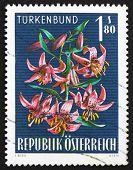 Postage stamp Austria 1966 Turk's Cap Lily, Alpine Flower