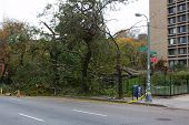 Downed Trees In NYC After Hurricane Sandy